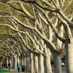 Trees in Our Cities and Towns 2013 Winner - Josh DeWare